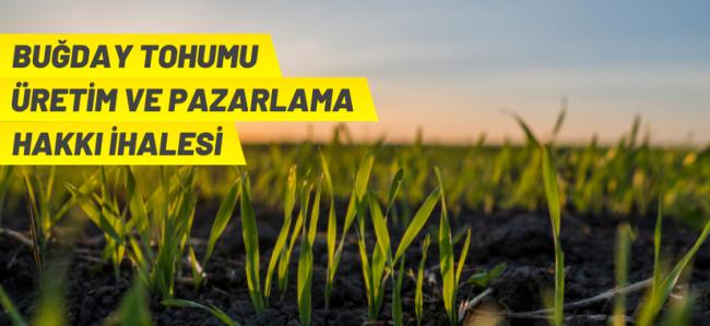 Tohumluk üretim ve pazarlama hakkı ihale ilanı